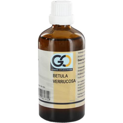 Go Betula verrucosa